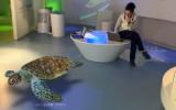 Animali 3D nei centri visitatori del Parco Nazionale Gran Paradiso