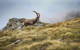 incontri a Giroparchi Nature Trail 2021