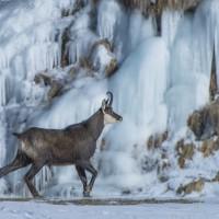 Passeggiata fra ghiacci - Massimo Arcaro