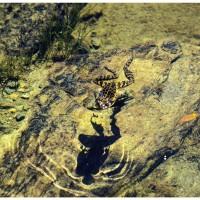 Dans les yeux dans les eaux - Foto di Roberto Cilenti