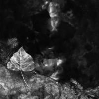 Dans les yeux, dans les eaux - Foto di Lorenzo Delfino