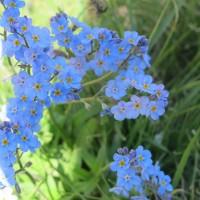Durante il cammino si ammira la ricchezza floristica di Valsavarenche, valle al 100% natura protetta