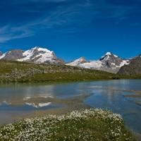 Grand Paradis dans le lac de Plan Borgnoz - Foto Davide Glarey - Archivio FGP
