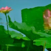 Un quadro naturale - Caterina Farina