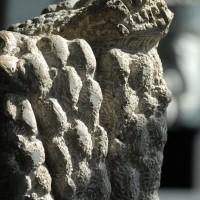 Natura Arte - Archivio FGP