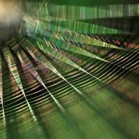 Ragnatela Solare di Emanuela Bonini - secondo premio - Foto Archivio FGP