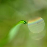 Serpente d'erba di Emanuela Bonini - Foto Archivio FGP
