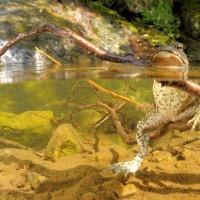 Sitting toad di Vittorio Ricci - terzo premio - Foto Archivio FGP