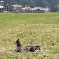 Viaggio Animali - Archivio FGP